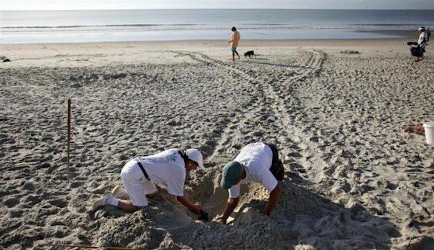 Protecting turtle hatchlings
