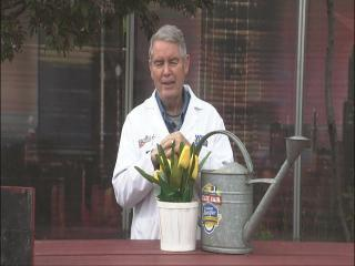 Dr. Dirt: All clear for late frost