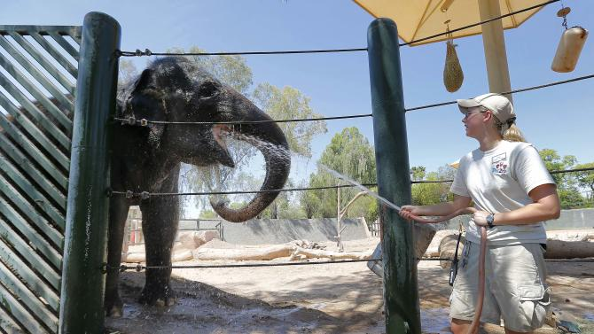 Handler Cheryl Becker cools off an Indian Elephant, at the Phoenix Zoo, Friday, June 28, 2013 in Phoenix. Excessive heat warnings will continue for much of the Desert Southwest as building high pressure triggers major warming in eastern California, Nevada, and Arizona. Dangerously hot temperatures are expected across the Arizona deserts throughout the week with a high of 118 Friday. (AP Photo/Matt York)