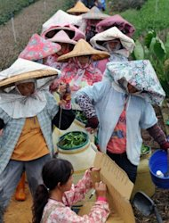 Farmers are seen lining up to weigh their tea leaves at a farm in Nantou, central Taiwan. The island's tea industry peaked in 1973 when it produced 28,000 tonnes of tea leaves, with 23,000 tonnes being exported, but since then the sector has been gradually losing its competitiveness due to labour shortages, rising labour costs and the appreciation of the local currency