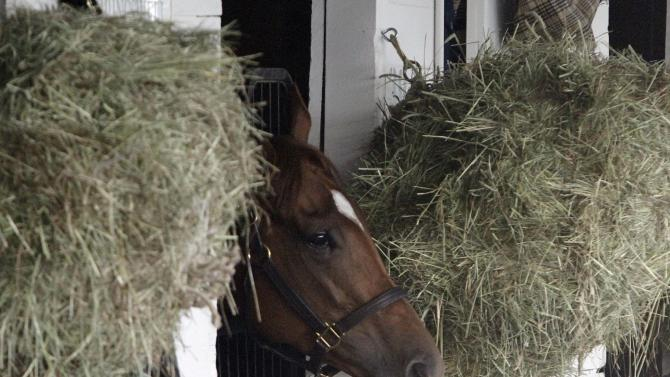 Kentucky Derby winner Animal Kingdom peers from his stall Sunday, May 8, 2011, in Louisville, Ky. The win was the colt's first race ever on a dirt track. (AP Photo/Garry Jones)