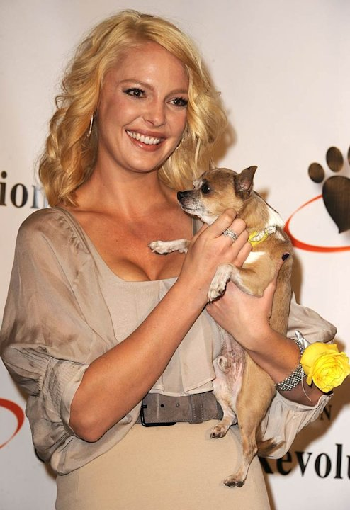 Katherine Heigl Animal Charity