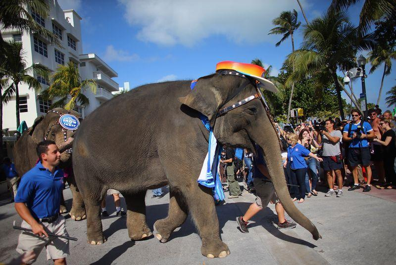 Ringling Brothers circus plans to stop using elephants in its shows by 2018