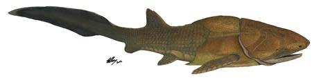 The heavily armoured fish, Entelognathus primordialis, is seen on this life restoration image