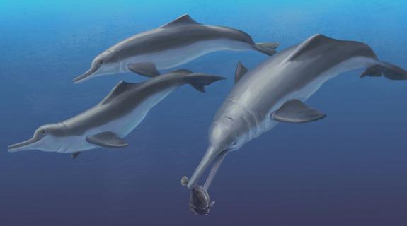 New Species of Ancient 'River' Dolphin Actually Lived in the Ocean