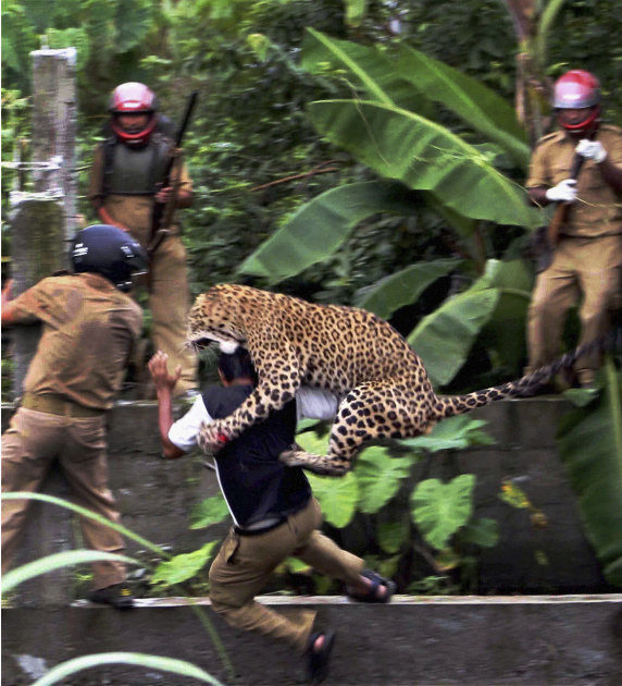 India Six http://jboy2244.wordpress.com/2011/07/20/leopard-mauls-six-people-in-attack-in-india/