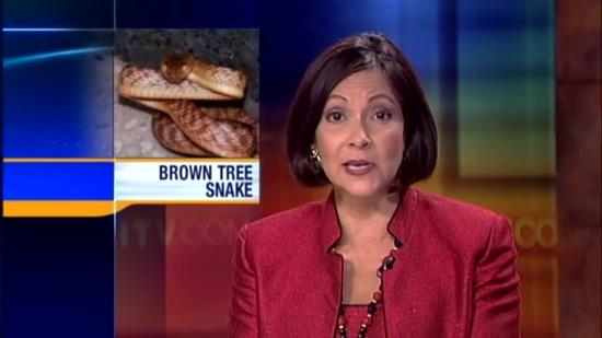 Brown tree snake initiative makes a comeback