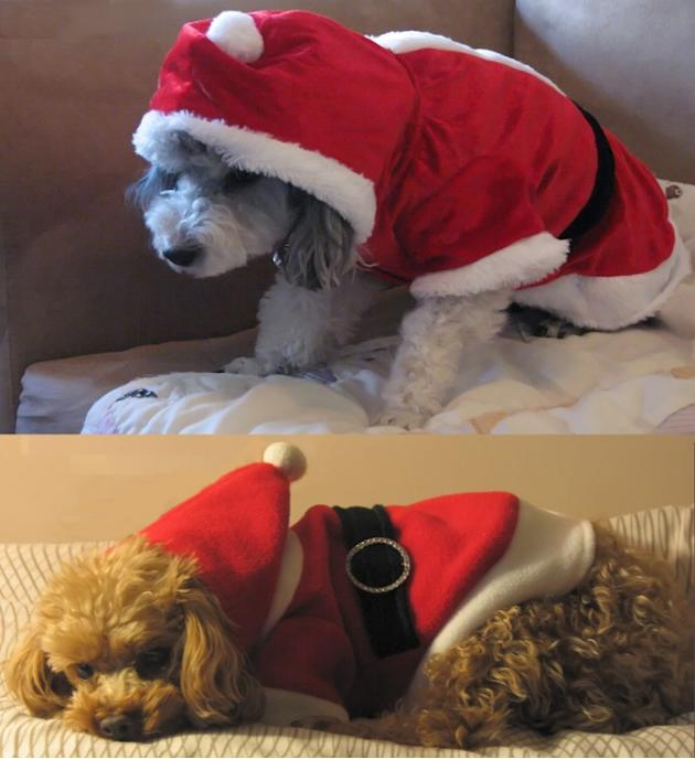 Hilarious Holiday Pets