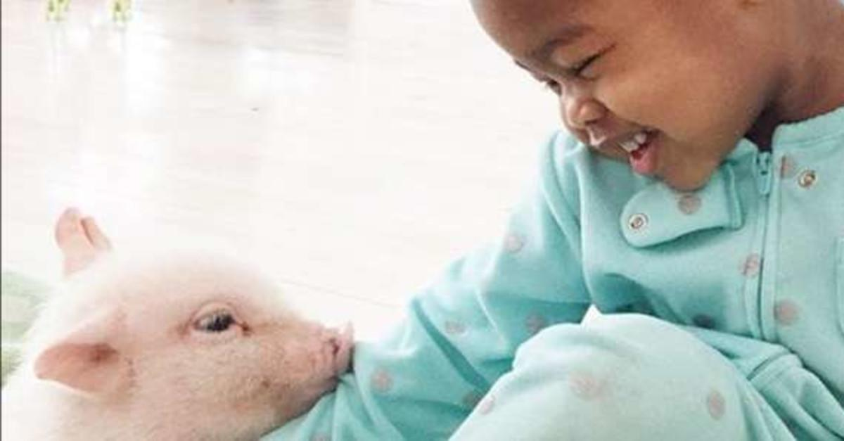 Girl And Teacup Piglet Are The Cutest Friends Ever