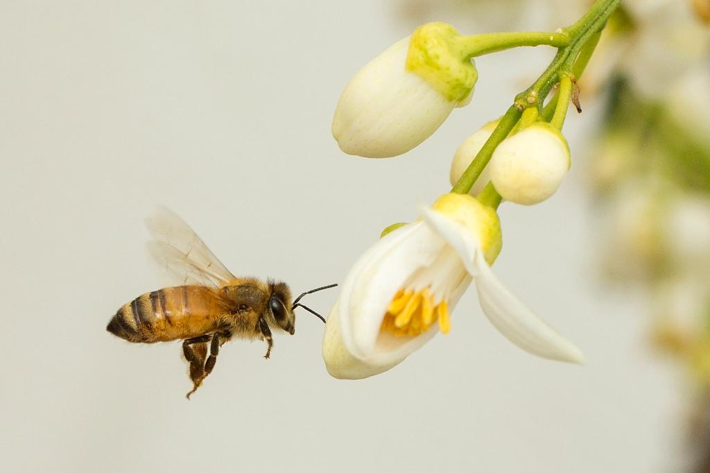 Million people urge Bayer to stop bee-killer pesticides