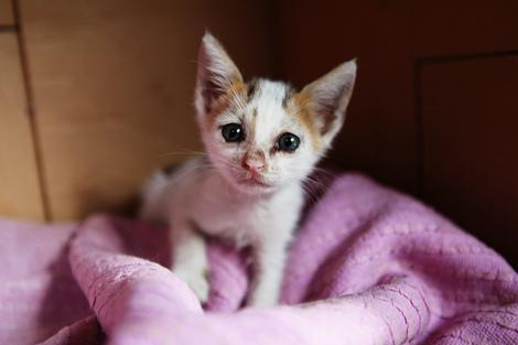 Kittens Taking Over Bay Area Shelters