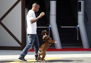 Mercedes Formula One driver Lewis Hamilton of Britain plays with his pet dog Roscoe in the paddock Formula One racetrack in Monza