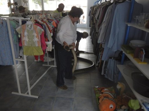 In this photo provided by Queensland Police, staff members hold a large python caught while slithering amongst cloths in a charity store, in Ingham, Queensland, Australia, Wednesday, July 10, 2013. Australian police investigating a suspected break-in at a charity store have discovered the culprit was actually a 5.7-meter (19-foot), 17-kilogram (37-pound) python. (AP Photo/Queensland Police)