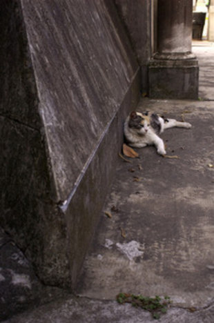 Another Recoleta Cat
