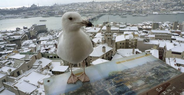 A seagull sits at the observation deck of the historical Galata tower with snow-covered Karakoy district and the old city in the background in Istanbul