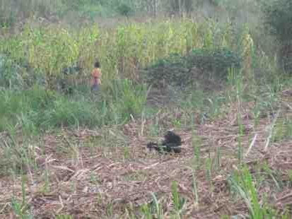 Photo-1 - Chimps in Uganda: The Landmine Snare - Africa