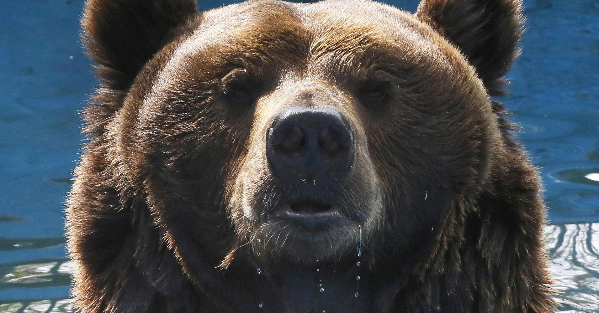 6 reasons the bear market has just begun