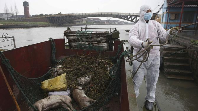Number of pigs in Shanghai river rises to 8,354