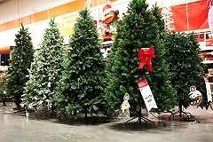 Christmas tree sales boom may hurt procrastinators