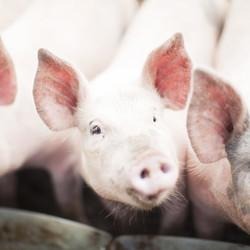 Walmart Asks Meat Producers To Treat Their Animals Better