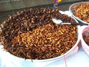 Mealworms: The Other-Other-Other White Meat?
