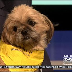 PAWS Pet Of The Week Chewie