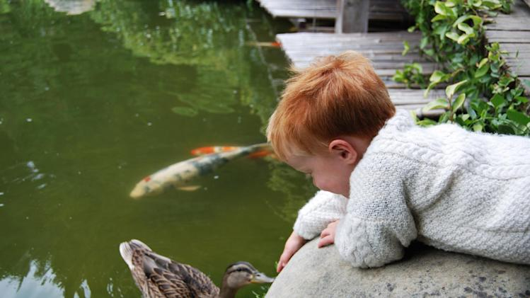 In this undated publicity photo provided by Stroller Hikes, a boy and duck are equally curious about each other on a Toddler Trek with Stroller Hikes to Hakone Gardens in Saratoga, Calif..  Families explore this Samurai style Japanese garden and its three very different trails and many garden regions. Stroller Hikes events take place on everything from paved paths in the city to beaches to gardens to off-road trails. (AP Photo/Courtesy Stroller Hikes, Debbie Frazier)