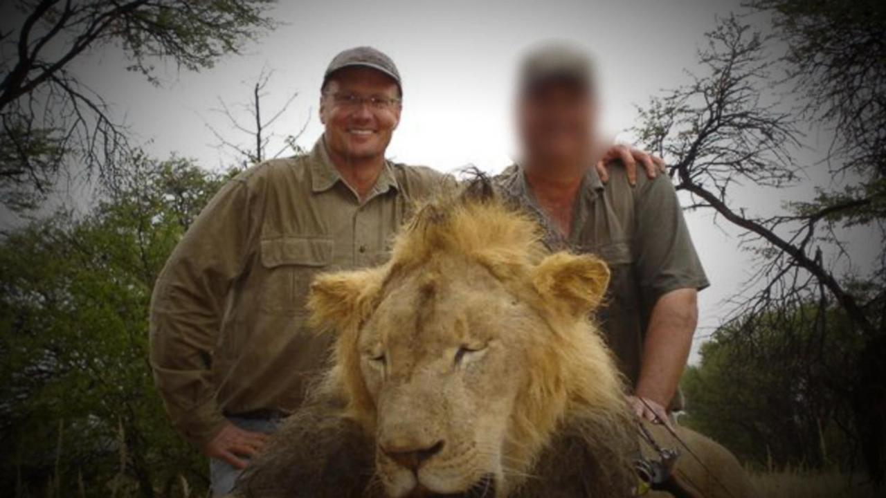 Cecil the Lion: New Details Emerge Into the Moments Before He Was Shot