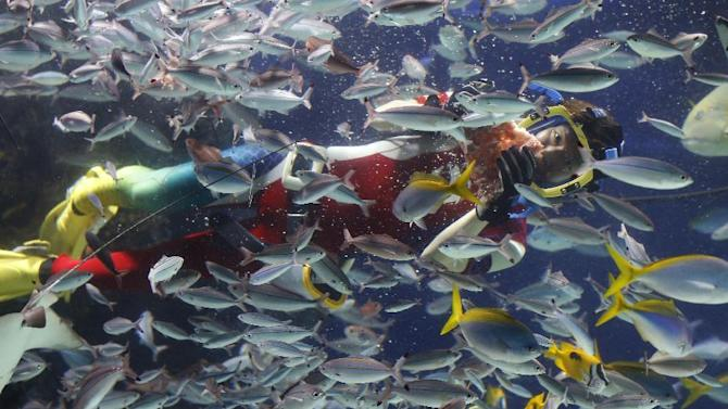 A diver feeds fish at Sunshine Aquarium during a special Valentine's Day event in Tokyo Sunday, Feb. 14, 2016. (AP Photo/Shizuo Kambayashi)