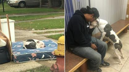 Heartbreaking Photo of Dog Left By Owners Prompts Man to Rescue the Pit Bull