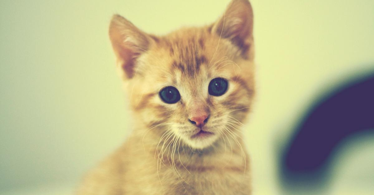 These Kittens Will Make Your Day Better
