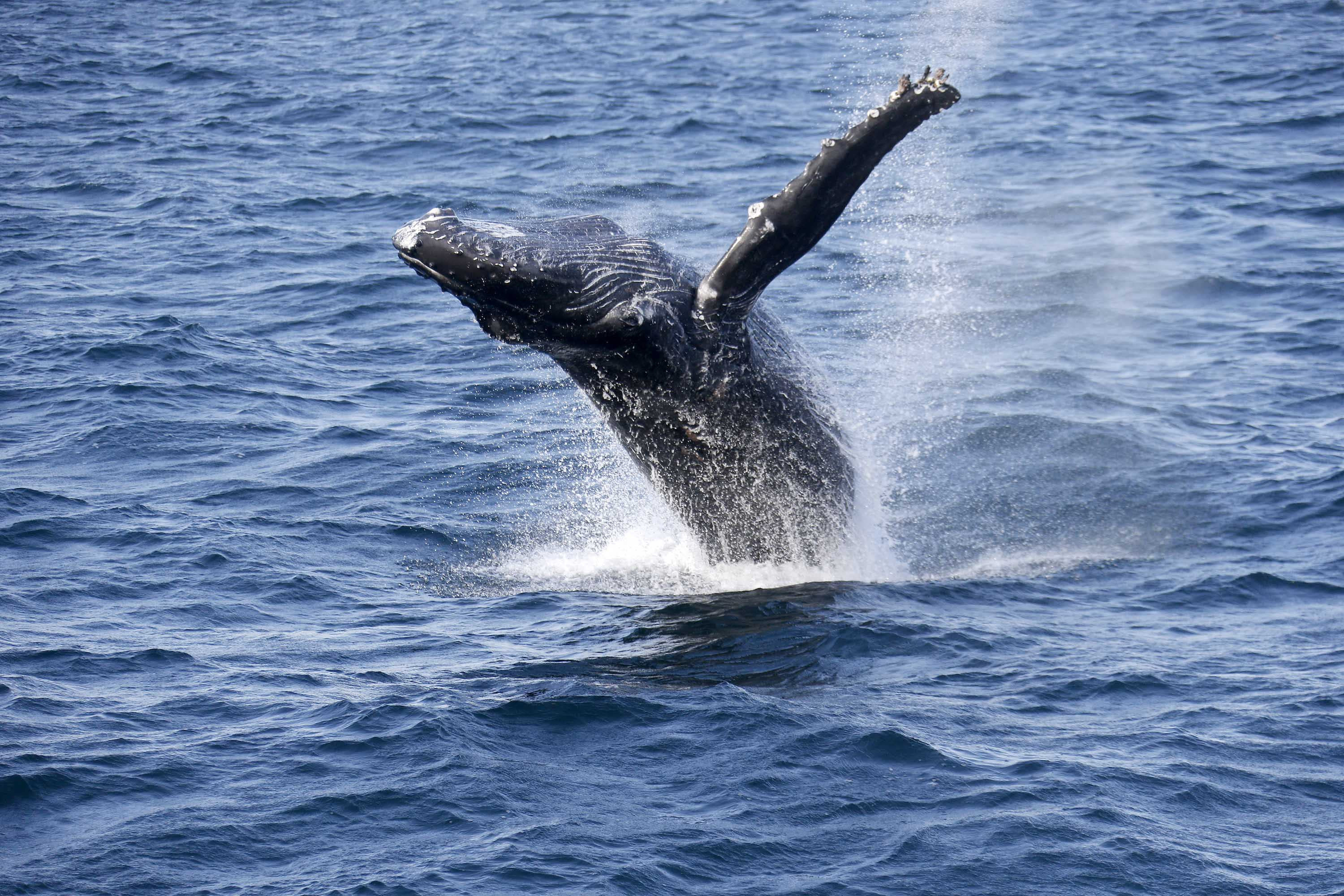 Correction: Tangled Whales-Crabbing story