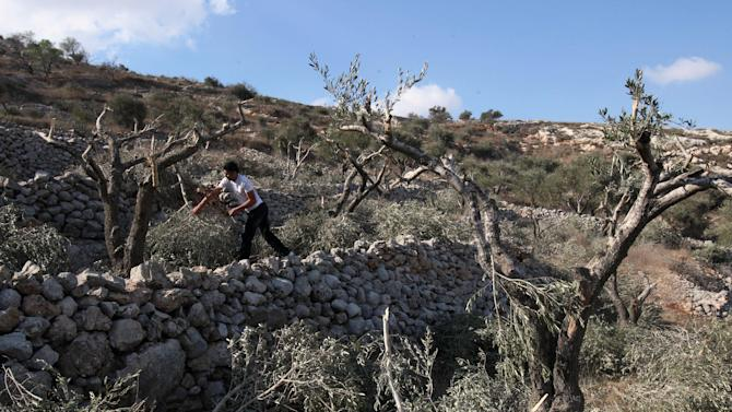 A Palestinian man carries broken branches of an olive tree which farmers say was cut overnight by Jewish settlers, in the northern West Bank village of Hawara, near Nablus, Wednesday  Oct. 6, 2010.  Palestinian farmers say Jewish settlers from the nearby settlement of Yitzhar cut more than 50 olive trees overnight. (AP Photo/Nasser Ishtayeh)