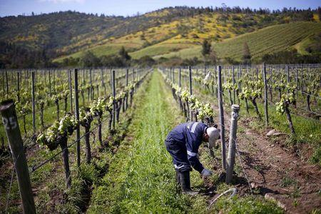 As the heat rises, the wines are a-changing