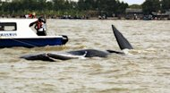Rescuers try to free a sperm whale (C) stuck in shallow waters at Pakis Jaya beach in Karawang, West Java, July 27, 2012. The rescue attempt was hampered by local tourists arriving on boats and driving the animal back into shallow waters