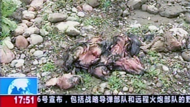 First Dead Pigs, Now Dead Ducks Foul a Chinese River