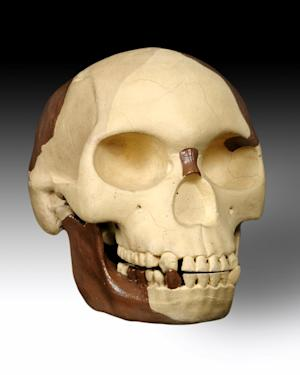 This is an undated image released by the Natural History Museum in on Wednesday Dec. 12, 2012 of the Piltdown skull. It was an archaeological hoax that fooled scientists for decades. A century on, researchers are determined to find out who was responsible for Piltdown Man, the missing link that never was. In December 1912, a lawyer and amateur archaeologist named Charles Dawson announced he'd made an astonishing discovery in a gravel pit in southern England _ prehistoric remains, up to 1 million years old, that combined the skull of a human and the jaw of an ape.  It was 40 years before the find was exposed as a hoax by scientists at London's Natural History Museum _ the same institution that had announced the find in 1912. The museum is marking the 100th anniversary of the hoax with a new push to find out who did it _ and why. (AP Photo/Natural History Museum) NO ARCHIVE