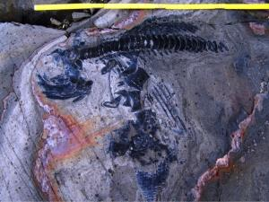 Ancient 'Fish Lizard' Graveyard Discovered …