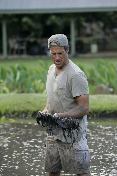 Dirty Jobs host Mike Rowe  rakes weeds out a flooded field before planing taro at Kukui Farms, a Taro field outside of Hawi, HI. 