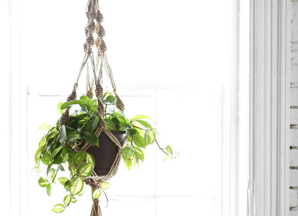 Buy or DIY: 7 Hanging Planters for the Great Indoors