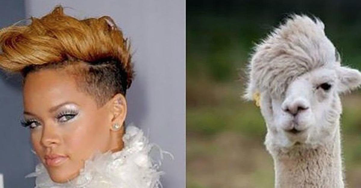 15 People With Animal Doppelgangers!