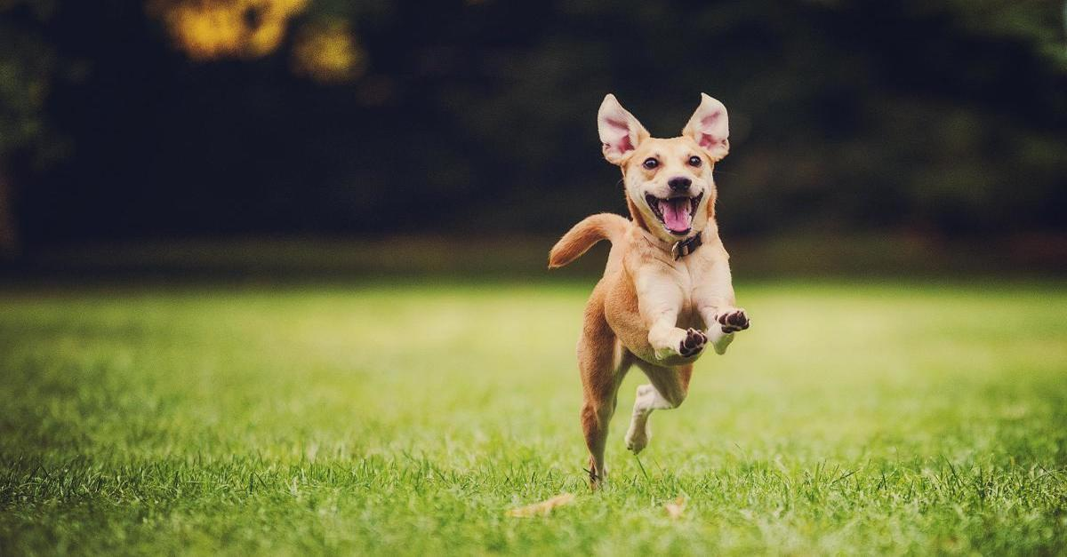 11 Happiest Breeds of Dogs, Even # 7 is Happy