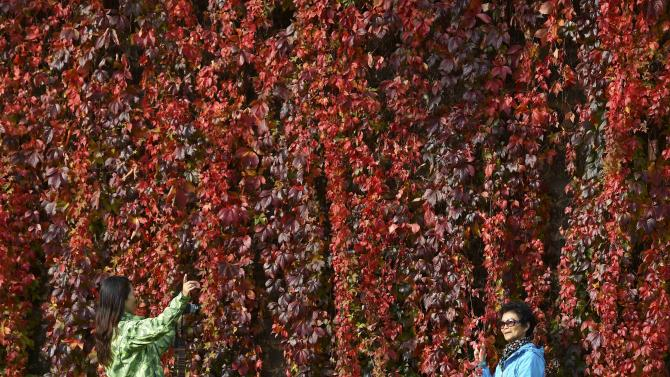 Tourists take photographs in front of autumn foliage in central London