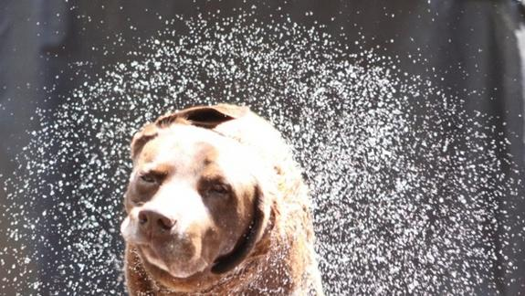 Wow! How Dogs Get Dry in 1-Second Shake