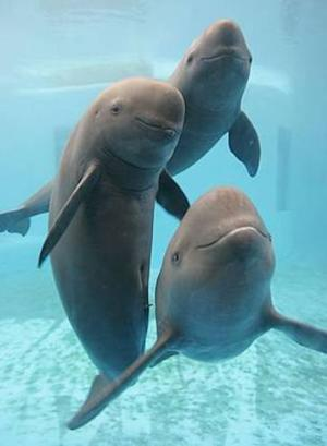 Expedition to Count Endangered Chinese Porpoises