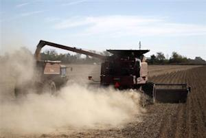 Soybean plants are harvested at a field in the city of Chacabuco
