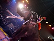 Circus Krone trauert um Elefant Colonel Joe