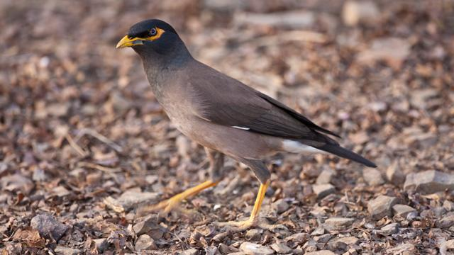 Foul-Mouth Bird Banned to Solitary