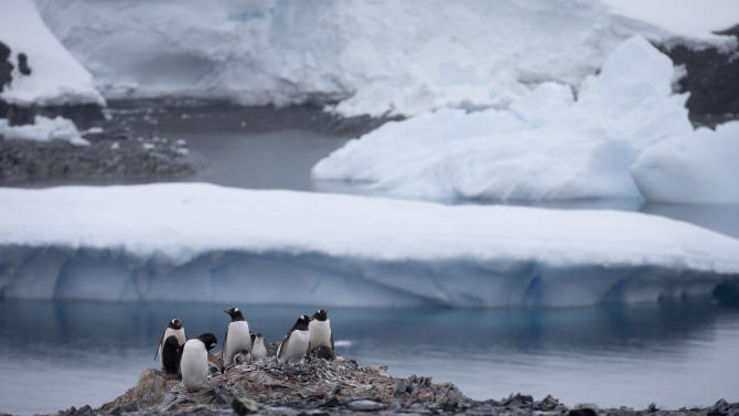 AP10ThingsToSee - Gentoo penguins stand on rocks near the Chilean station Bernardo O'Higgins, Antarctica on Jan. 22, 2015. Here on the Antarctic peninsula, where the continent is warming the fastest because the land sticks out in the warmer ocean, 49 billion tons of ice (nearly 45 billion metric tons) is lost a year according to NASA. (AP Photo/Natacha Pisarenko)