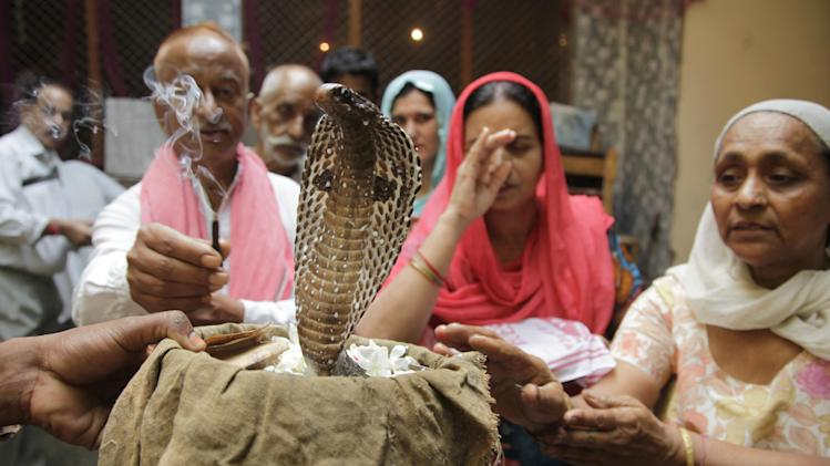 Hindu devotees light incense and offer prayers to a snake on Nag Panchami festival in Jammu, India, Saturday, Aug. 30, 2014. The Hindu festival of Nag Panchami is a day dedicated to the worship of snakes. (AP Photo/Channi Anand)